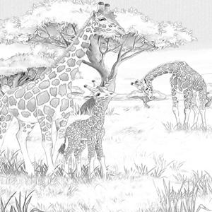 Giraffes kleurplaat
