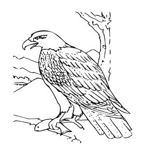 Kleurplaten Dieren Voor Volwasenen Roofvogel Kleurplaat
