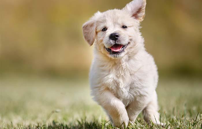 Tips die je moet weten over de bescherming van je hond